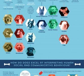 Визуализация: Эволюция собаки